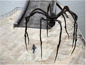 spider THG