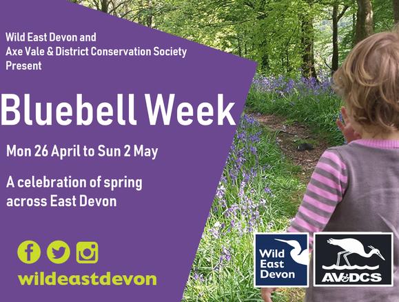 Bluebell Week
