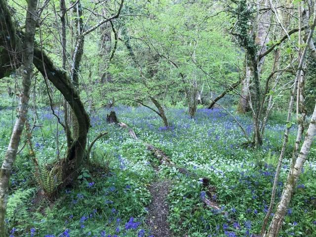 Holyford Woods