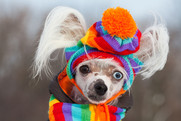 A dog wearing a colourful handmade scarf