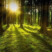 Picture of trees in a forest