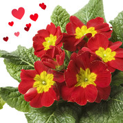 Picture of plants for Valentine's
