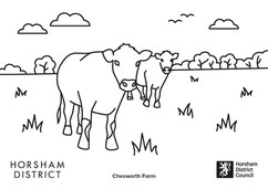 Chesworth Farm cows colouring in sheet
