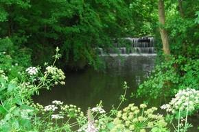 Horsham Riverside Walk river