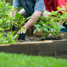 Man and boy planting plants in flowerbed