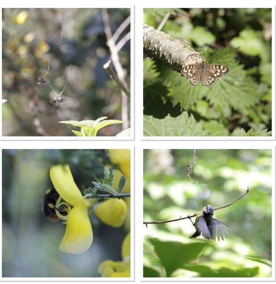 wildlife pics