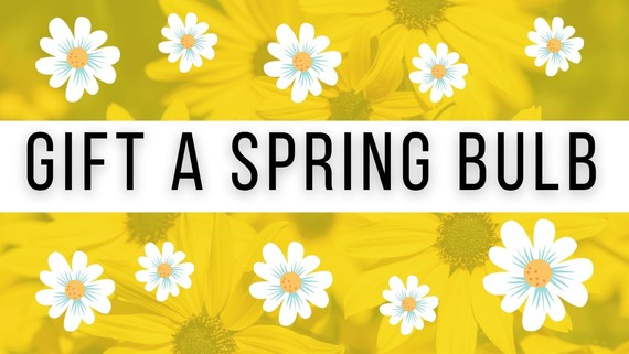 Gift a Spring bulb to a local Care Home