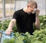 worker suffering from heat stress