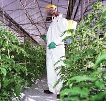 Pesticides Exposure Assessment