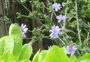 Blooming Lambeth