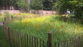 Palace Road Nature Garden