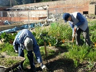 Bedfords Park Walled Garden people working