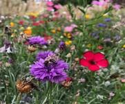 Wildflowers photo