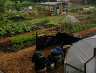 Community Market Garden