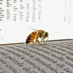 Bee on book