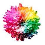 Colourfui flower