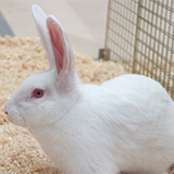 Newcastle University survey on the Rabbit Grimace Scale