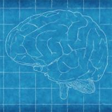 Six things we've learnt about the brain using 3Rs methods