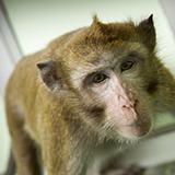 Primate Welfare Meeting 2020