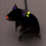 Mapping mouse behaviour in 3D