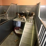 Socially housed dogs