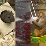 Examples of enrichment for mice, fish and monkeys
