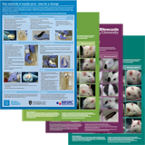 The mouse handling poster and grimace scales for mice, rabbits and rats