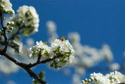 Don't confuse hay fever with covid symptoms