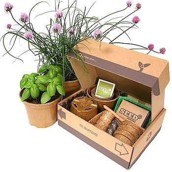 herb growing starter pack