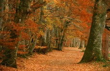 Autumnal Woods