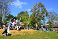 Upton Country Park Wildlife Week
