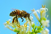 KC LIB bees 1