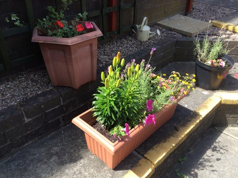 Tenants gardening competition 2019