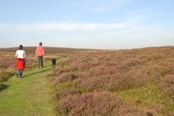 walking Long Mynd