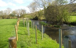 tree planting along the River Clun