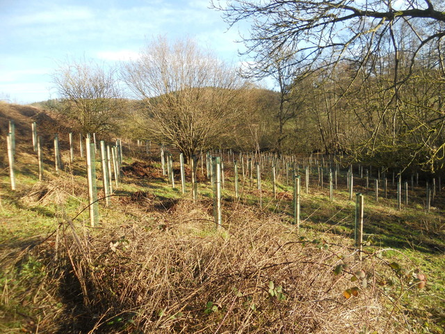Tree planting in the Shropshire Hills