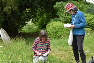 surveying plants in a local churchyard