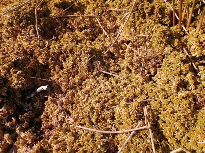 peatland habitat