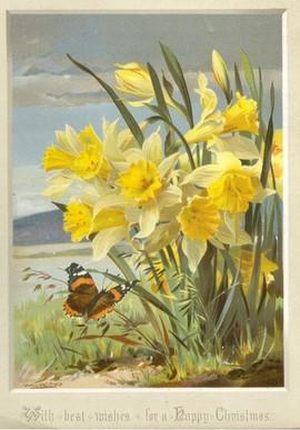Daffodil Christmas card