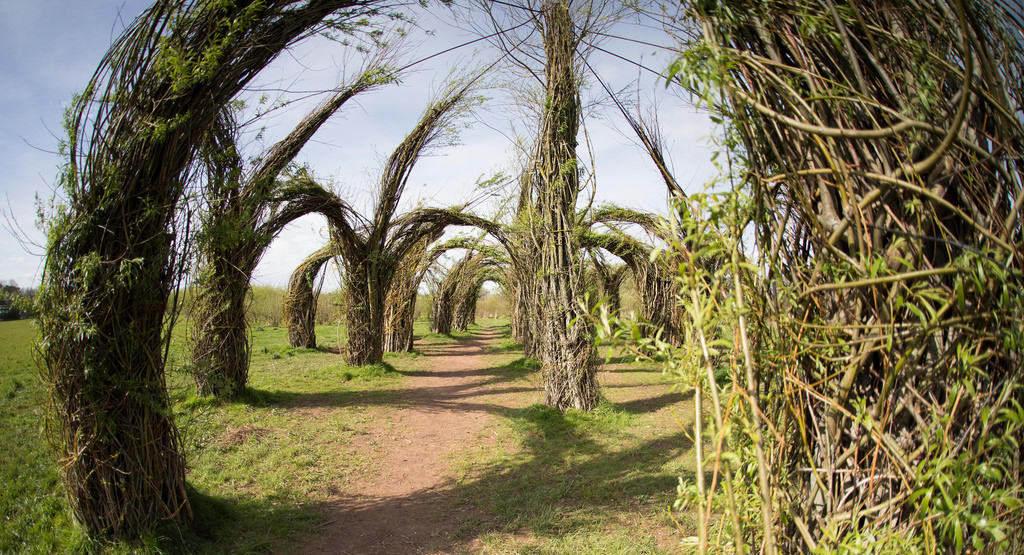 Longrun Meadow
