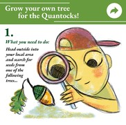 grow a tree 1