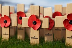 poppies on small crosses in a grassy area