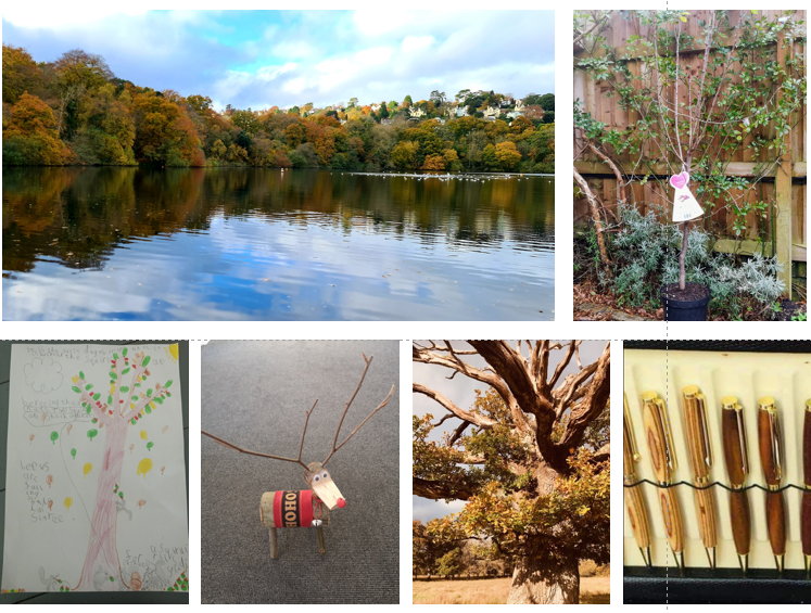 Images of the wining entries and prizes in the National Tree Week competition