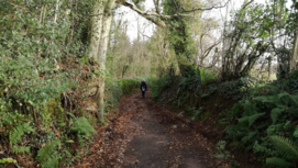 Person walking down a country path with trees on either side
