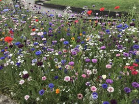 Wildflowers in Teignmouth