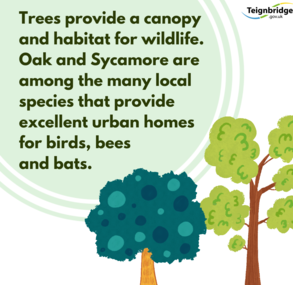 Trees provide a canopy and habitat for wildlife.  Oaks and Sycamores are among many local species that provide excellent homes