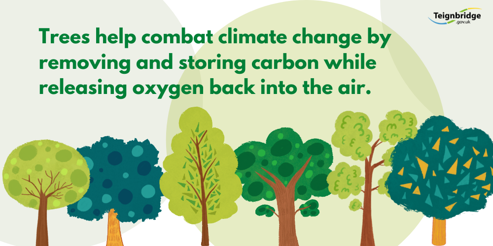 trees help to combat climate change by removing and storing carbon while releasing oxygen back into the air