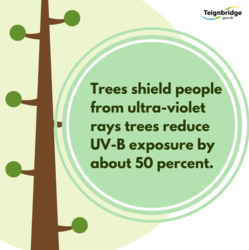 Trees shield people from ultra-violet rays, trees reduce UV-B exposure by about 50 per cent