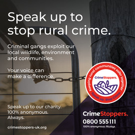Speak up to stop rural crime.  Crinminal gangs exploit our local wildlife, environment and communities.  Your voice can make a difference