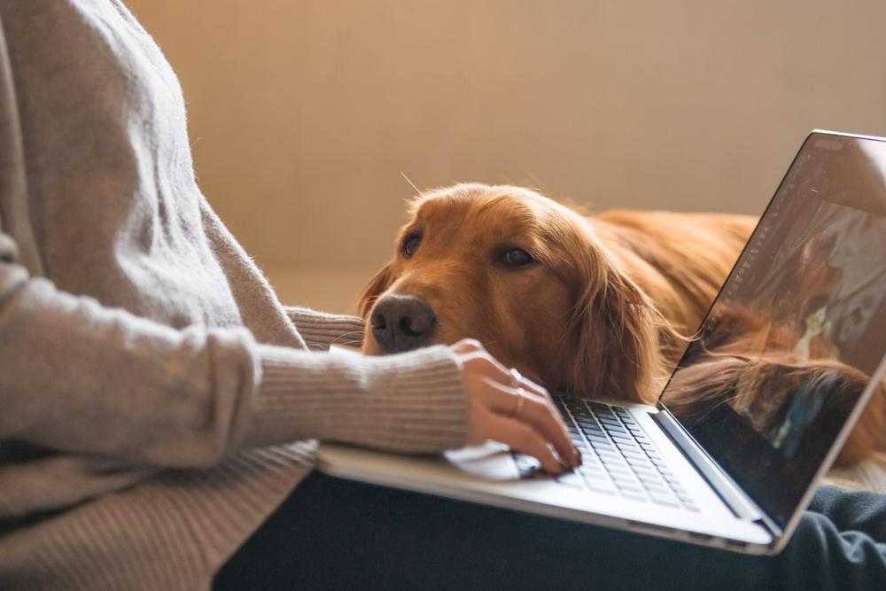 Dog bored at home